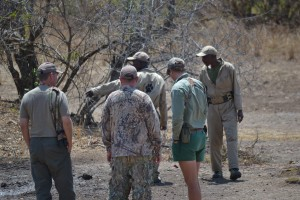 Searching for Cape Buffalo tracks